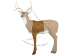 Delta McKenzie Target 3D HD Medium Deer Midsection